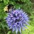 Toanche Flora & Fauna icon