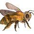 The Honeybee Conservancy Brooklyn BeeBlitz icon