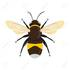 Bumble Bees of Northwestern Ontario icon