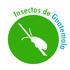 Insectos de Guatemala icon