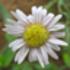 Wild  and Naturalised plants of Botswana icon