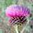 45676 icon thumb