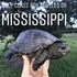 Gulf Coast Box Turtles of Mississippi icon