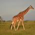 Laikipia Wildlife Warriors icon