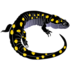 Ohio Vernal Pool Network icon