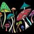Fungi Risaralda icon
