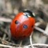 Insectes de la région Bretagne icon