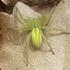 Arachnides de la région Bretagne icon