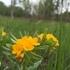 Oakland Township Parks Flora icon