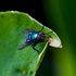 Stanley Park BioBlitz - Entomology icon