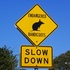 Australia's Untold Roadtoll - Recording Roadkill and Road Trauma icon