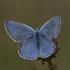 Farfalle del veronese icon