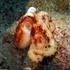 Davao Gulf Marine Biodiversity icon