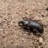 Arthropoda from Parque Nacional Los Glaciares, Argentina icon