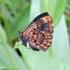 Mariposas de la Sierra Nevada de Santa Marta icon