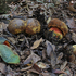 Funghi della Sardegna icon
