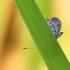 Top End 2019: Invertebrates icon