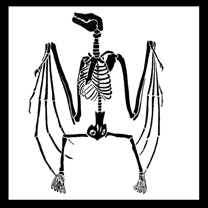 Skulls and Bones · iNaturalist.org