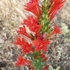 Flora of Erath County icon