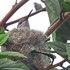 Proyecto Adopta un Árbol: inventario de la flora urbana de la Región de Coquimbo icon