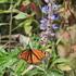 Monitoreo  de la Mariposa monarca Guanajuato 2019-2020 icon