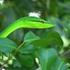 Registro fotográfico de la Naturaleza de Chankom. icon