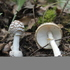 World fungal diversity icon