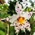 Orchids of the Coast of Ecuador icon