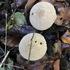 Fungi of South West England icon