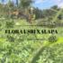Flora (USBI) Xalapa Ver. icon