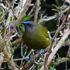 Dunedin Townbelt Biodiversity icon