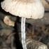 Champignons et Lichens de Madagascar icon