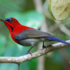 Singapore Birds icon