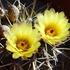 Cactus de la Argentina icon