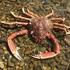 Crustacés de la région Bretagne icon