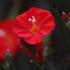 Invasive Alien Plant Species of Bhutan icon