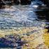 "Ocean Sanctuaries ""King Tide"" Bioblitz Jan 2020 icon"