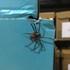 Arachnida norte de Chile icon