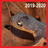 Pacific Newts (Roadkill, 2019-2020) - Lexington Reservoir icon