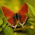 Butterflies of Limpopo Province icon