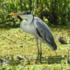 Ecorregión: Deltas e Islas del Paraná icon