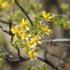 Ecorregión: Monte de Llanuras y Mesetas icon