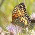 Butterflies of Southeastern Utah icon