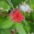 Bestuivers en plagen van Aruba / Pollinators and pests of Aruba icon