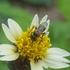 Bestuivers en plagen van Bonaire / Pollinators and pests of Bonaire icon