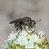 Bestuivers en plagen van Sint Eustatius / Pollinators and pests of Sint Eustatius icon