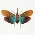 Lanternflies (Fulgoridae) of the Malay Archipelago icon