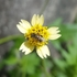 Polinizadores y plagas de Puerto Rico / Pollinators and pests of Puerto Rico icon