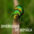 Diversidad de Boyacá icon