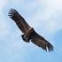 Птицы Дагестана icon
